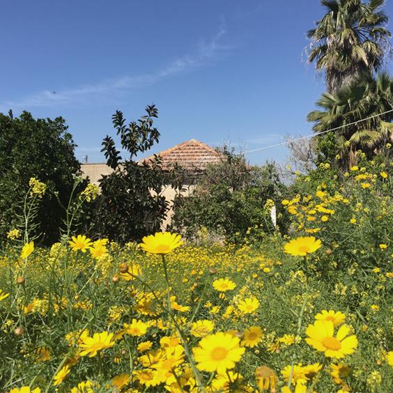 השדה מאחורי הבית. מופעי אביב