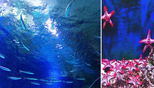 """דגים עד מעל לראש. כוכבי המקום, ואקווריום-ענק עילי, ב""""אקווריום ישראל"""""""