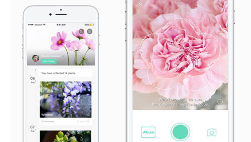 דברו אלינו באפליקציית פרחים. אפשרות ליצור אלבום של הפרחים שאהבתם בדרך
