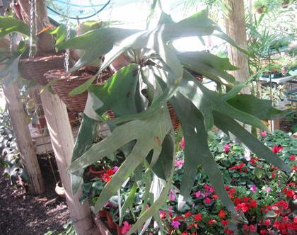 קעריות קש עם קרני הצבי לגינה או חצר