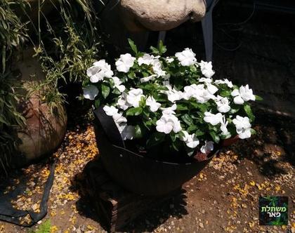 וינקה שתולה בצמיג מתאים לחצר, גינה ושמש מלאה