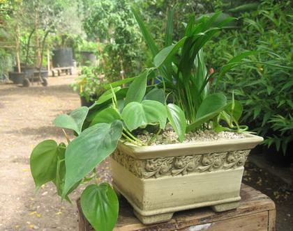 צמחי בית ירוקים שתולים בחרס מהודר דמוי ״אבן״ עציץ מתנה לבית