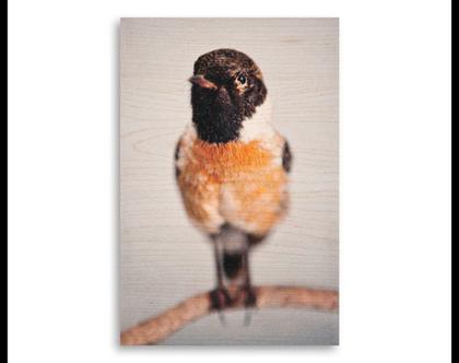 תמונה על עץ | 'דוחל' | ציפור על עץ | תמונה לבית | תמונה למשרד | הדפסה על עץ | תמונה לסלון | מתנה מקורית