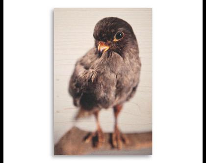 תמונה על עץ | 'בז ערב' | ציפור על עץ | תמונה לבית | תמונה למשרד | הדפסה על עץ | תמונה לסלון | מתנה מקורית