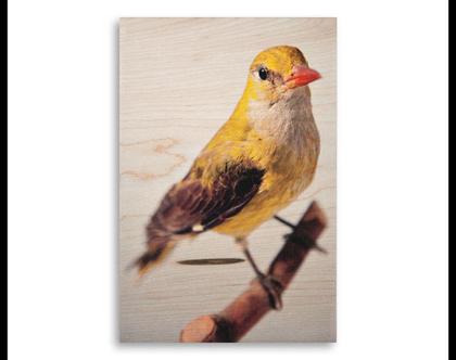 תמונה על עץ | 'זהבן מחלל' | ציפור על עץ | תמונה לבית | תמונה למשרד | הדפסה על עץ | תמונה לסלון | מתנה מקורית
