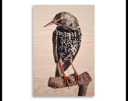 תמונה על עץ | 'זרזיר מצוי' | ציפור על עץ | תמונה לבית | תמונה למשרד | הדפסה על עץ | תמונה לסלון | מתנה מקורית