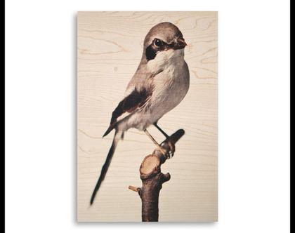 תמונה על עץ | 'חנקן גדול' | ציפור על עץ | תמונה לבית | תמונה למשרד | הדפסה על עץ | תמונה לסלון | מתנה מקורית
