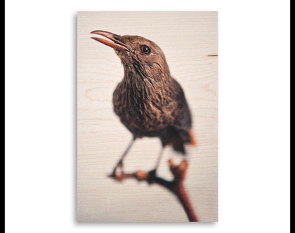 תמונה על עץ | 'טריסטרמית' | ציפור על עץ | תמונה לבית | תמונה למשרד | הדפסה על עץ | תמונה לסלון | מתנה מקורית
