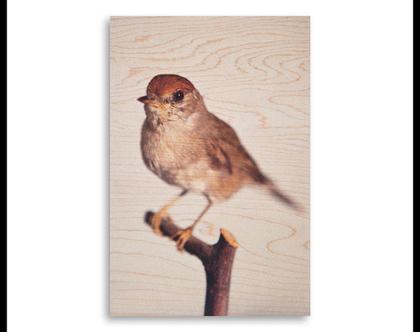תמונה על עץ | 'סבכי שחור כיפה' | ציפור על עץ | תמונה לבית | תמונה למשרד | הדפסה על עץ | תמונה לסלון | מתנה מקורית