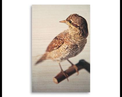 תמונה על עץ | 'סבראש' | ציפור על עץ | תמונה לבית | תמונה למשרד | הדפסה על עץ | תמונה לסלון | מתנה מקורית