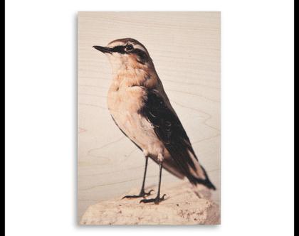 תמונה על עץ | 'סלעית אירופית' | ציפור על עץ | תמונה לבית | תמונה למשרד | הדפסה על עץ | תמונה לסלון | מתנה מקורית