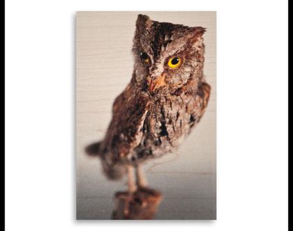 תמונה על עץ | 'שעיר מצוי' | ציפור על עץ | תמונה לבית | תמונה למשרד | הדפסה על עץ | תמונה לסלון | מתנה מקורית