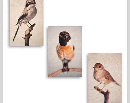 תמונות על עץ | שלישיית תמונות במחיר מעופף | ציפורים על עץ | תמונות מקוריות | תמונות לבית | תמונות למשרד | תמונות לסלון | הדפסה על עץ |