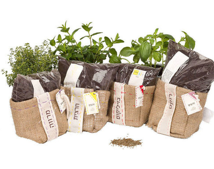עציציוטה, ערכת שתילה, גידול צמחי תבלין, גינון אורבני, ערכת גידול צמחי תבלין, עציץ מתנה, מתנה לטו בשבט