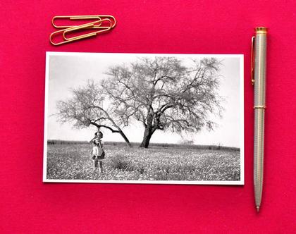 גלויה: הילדה והעץ