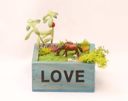 עציץ מעוצב- גינה מיניאטורית - love box 1