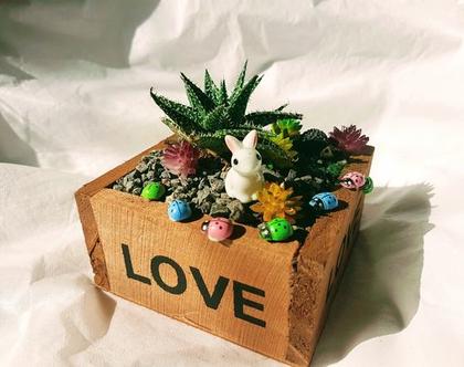 עציץ מעוצב- גינה מיניאטורית - love box 2