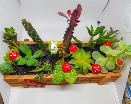 עציץ מעוצב- גינה מיניאטורית - קופסת קפה מלבנית 3- צמחים זה העיקר