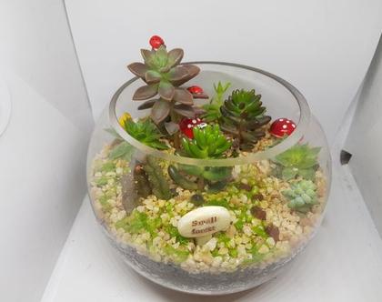 עציץ מעוצב- גינה מיניאטורית - עולם מופלא 5 - צמחים זה העיקר