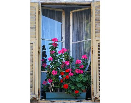 גלויה מצולמת. חלון עתיק עם פרחים. חלון ישן. פרינט מקורי. צילומים מקוריים. כרטיס ברכה. הדפס מקורי. הדפס עיר עתיקה.