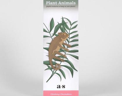 חיית צמח | chameleon | קישוט לעציץ | זיקית