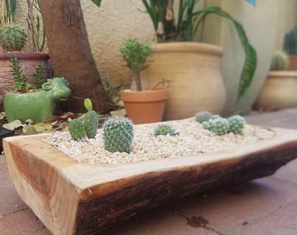 אדנית עץ-עץ ברוש טבעי ומעוצב