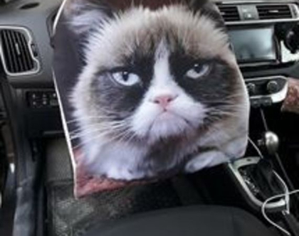 כיסוי להגה | כיסוי הגה לרכב | כיסוי נגד השמש | כיסוי בעיצוב אישי - דגם חתול
