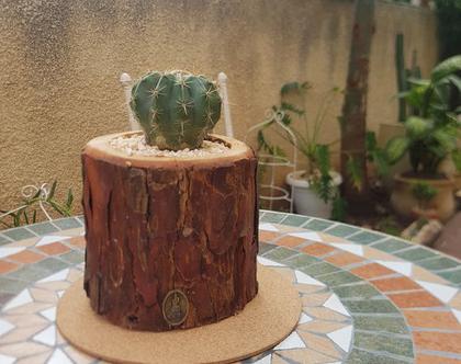 בול קקטוס עגול קלאסי-עץ הפקאן