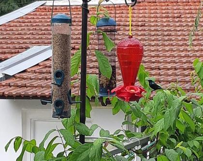 תחנת האכלה ושתייה לציפורים בגינה