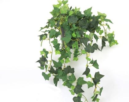 צמח נשפך בכלי בטון