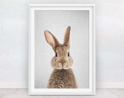 ארנב | פוסטר לחדרי ילדים | עיצוב לחדר ילדים | בעלי חיים תמונות | פוסטר מעוצב | תמונות לתליה | חדרי תינוקות | תמונות חמודות | סט פוסטרים שפן