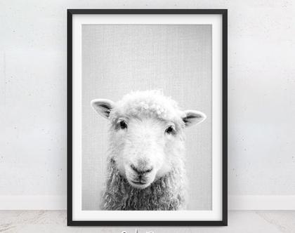 כבשה | תמונות של חיות | תמונה לחדר ילדים | בעלי חיים תמונות | מתנה | תמונה על הקיר | תמונות לתליה | שחור לבן | עיצוב חדרי ילדים | סט פוסטרים