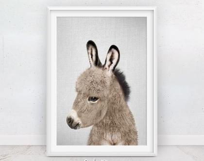 חמור | חדרי תינוקות | עיצוב לחדר ילדים | בעלי חיים תמונות | תמונה על הקיר | תמונות לתליה | תמונות למסגור | תמונות חמודות | סט פוסטרים