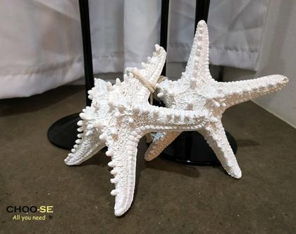 עיצוב לבית, מתנה לחג, עיצוב ים, ים, זוג כוכבי ים לבן