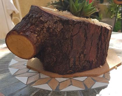 קקטוס חזק במיוחד-שתול בעציץ מעץ אשל-מתאים למקום בלי הרבה אור