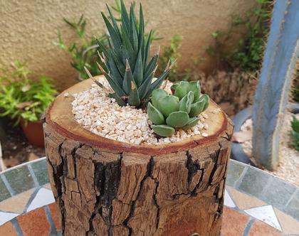 בול קקטוס-עם שני צמחים! סוקולנט נשפך