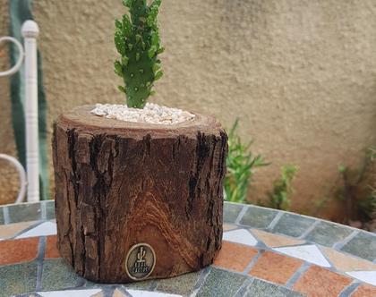 בול קקטוס -עציץ קטן מעץ