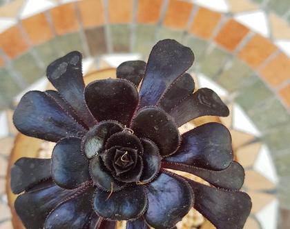 בול קקטוס-נצחה שם הצמח! פרח שחור וסגול