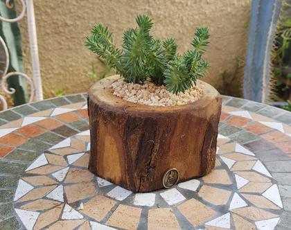 בול קקטוס עם צמח חזק ונשפך שמתאים למקום עם אור,