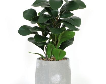 צמח ירוק בעציץ אפור 01