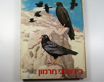 בין שלגי חרמון - מהדורה מיוחדת - 1977