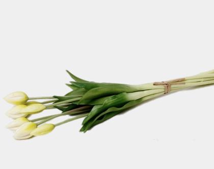 צרור ציבעונים / טוליפ לבן