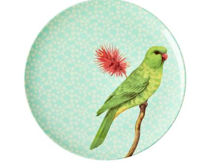 צלחת מלמין מנה ראשונה ציפור רקע מנטה | RICE DK