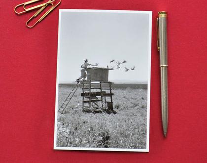 גלויה: שובך יונים, אזור עפולה, 1950