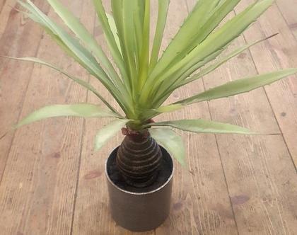 צמח מלאכותי קוצני באגרטל