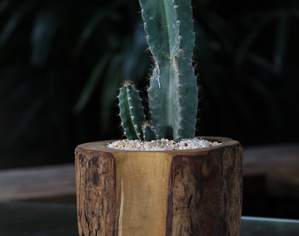בול קקטוס-גדול-עציץ עץ עבודת יד