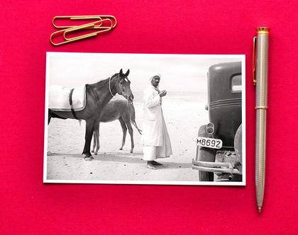 גלויה: בדואי עם סוסיו בנגב, 1946