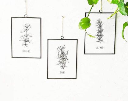 סט 3 איורים צמחי תבלין מודפסים על זכוכית