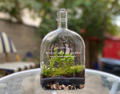 טרריום צמחים - צמחים בצנצנת 1 ליטר