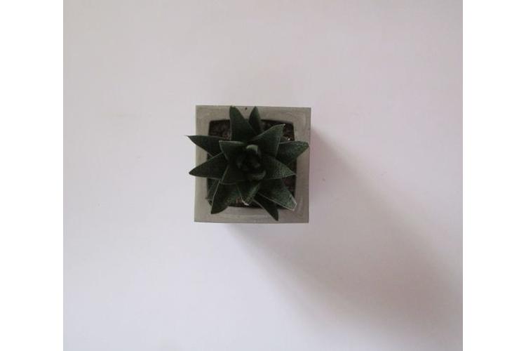 עציץ בטון מרובע, עציץ מבטון, אדנית בטון, מתנה למשרד, מתנה לעובדים, מתנה לחג, עציץ בעבודת יד, עיצוב הבית, עציץ בסגנון תעשייתי, עציץ מעוצב